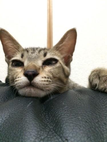猫アップの写真