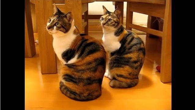 画面左上を見る猫
