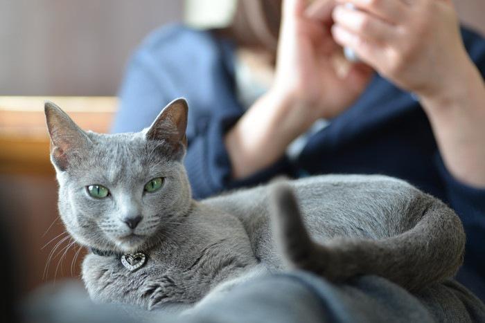 グレーの猫と女性