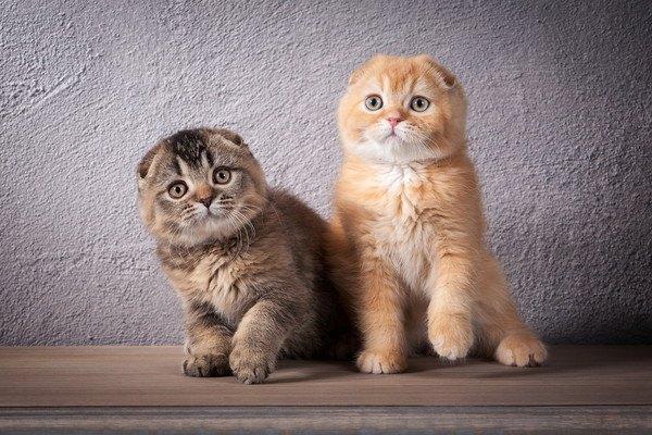 スコの子猫2匹