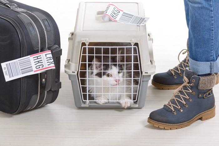 キャリーに入った猫とスーツケース