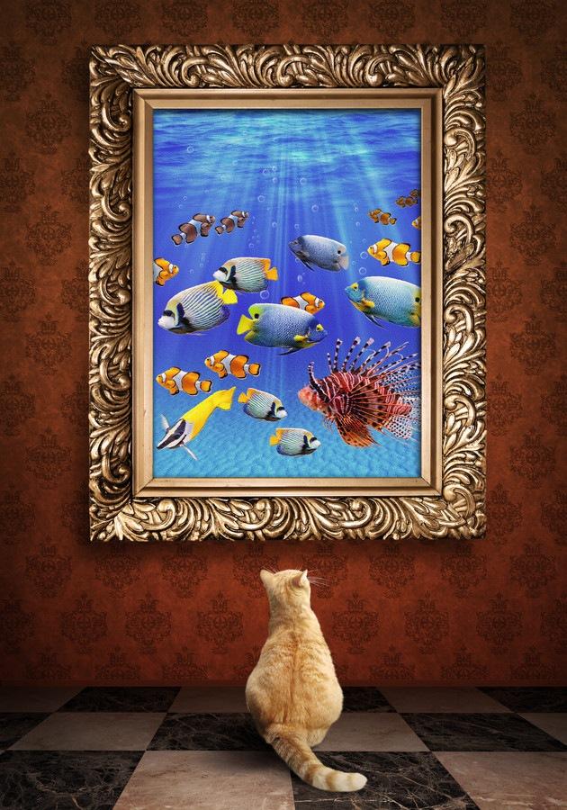 魚の絵を見る猫