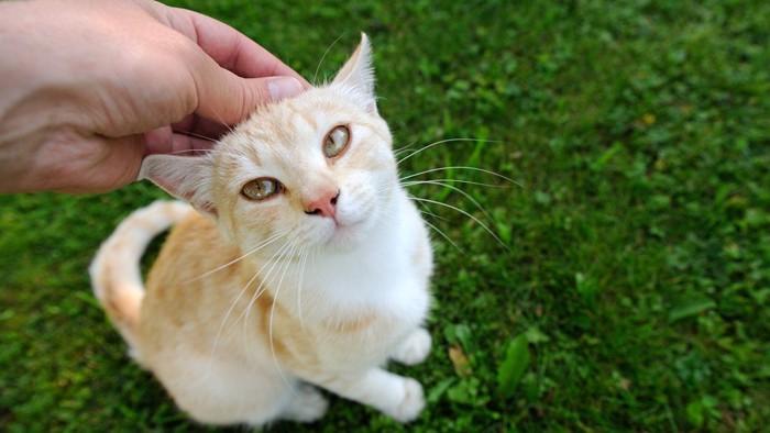 甘えた顔で見つめる猫