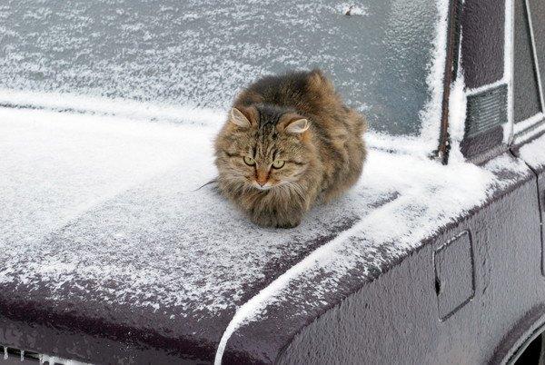 寒い日の猫と車