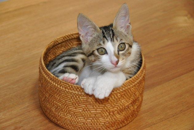 小さいカゴの中にいる子猫の写真