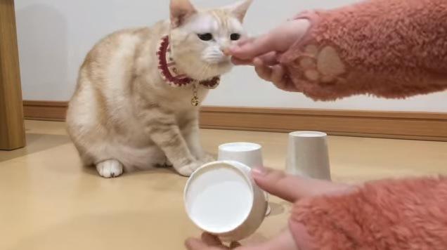 フードの匂いをかぐ猫