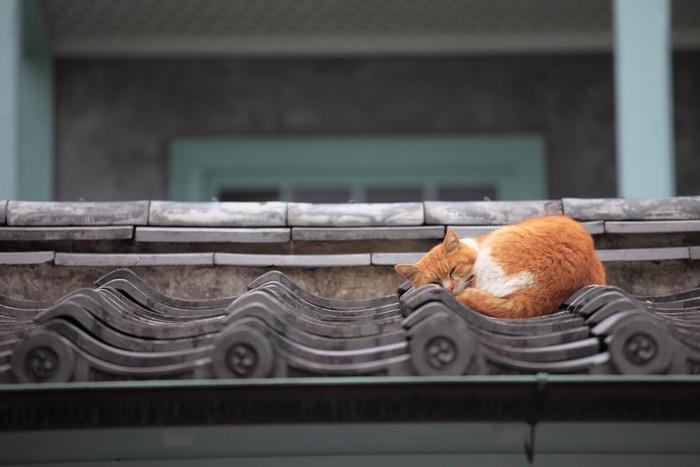 家の屋根の上で眠る猫