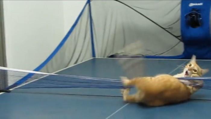 ネットに突っ込む猫