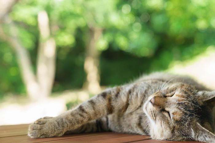 気持ちよさそうに日なたぼっこする猫