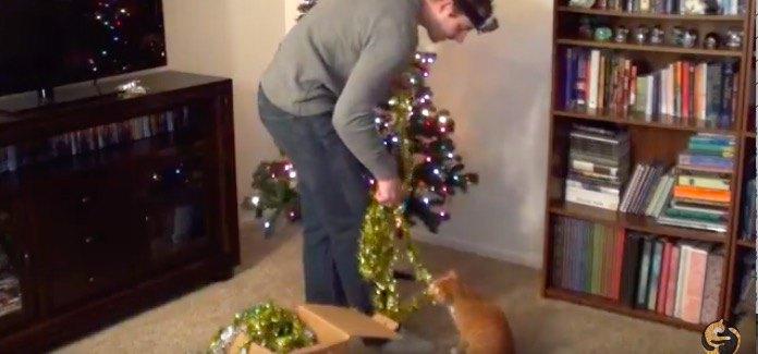 飾りを引っ張る猫