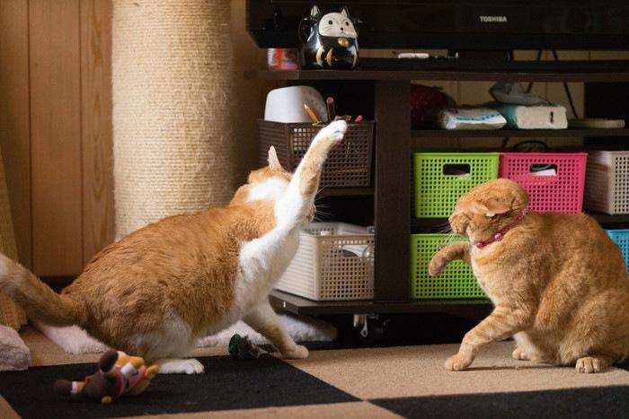 猫パンチする猫2匹