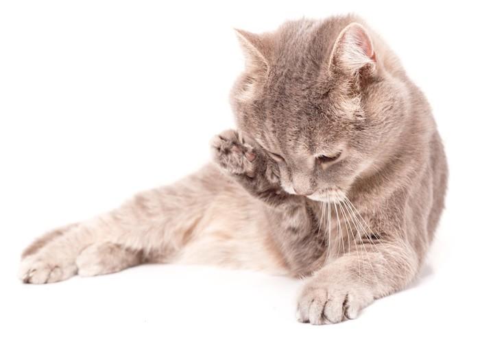 顔を洗う猫