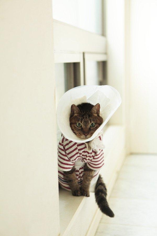 エリザベスカラーの猫