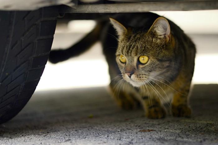 車体の下に潜り込んでいる猫