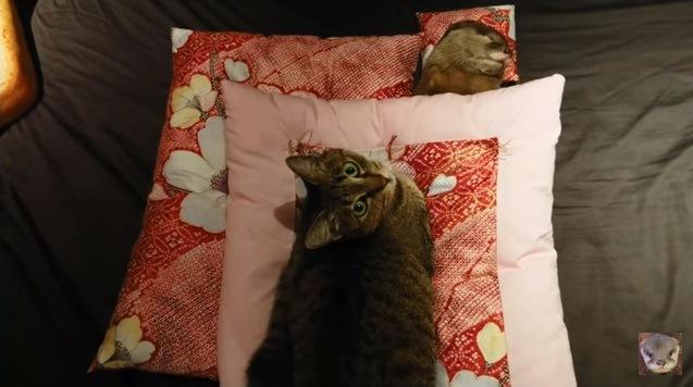 カメラを見上げる猫と眠るカワウソ