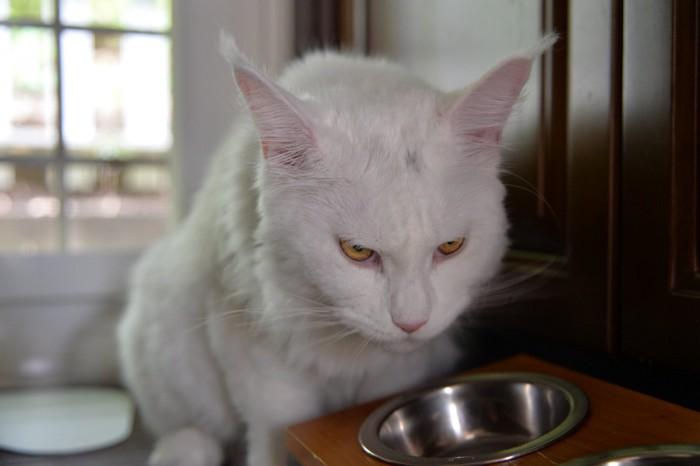 正面向いた猫