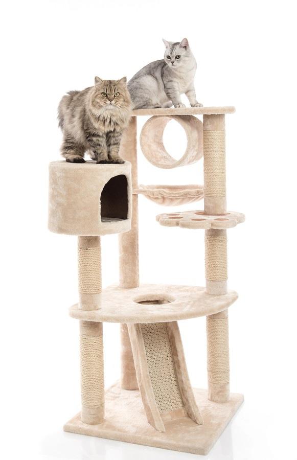 キャットタワーのてっぺんに居る猫
