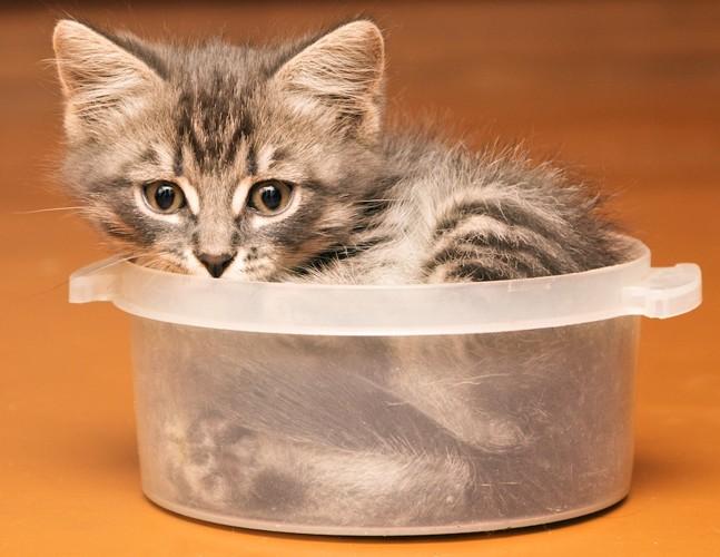 タッパーで丸くなった猫