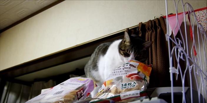お菓子の袋をのぞく猫