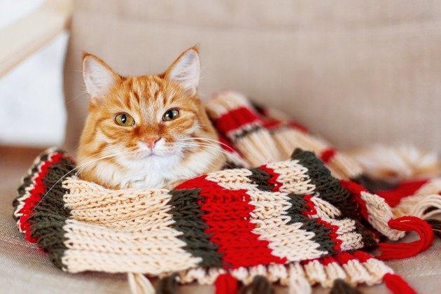 ファッションアイテムと猫