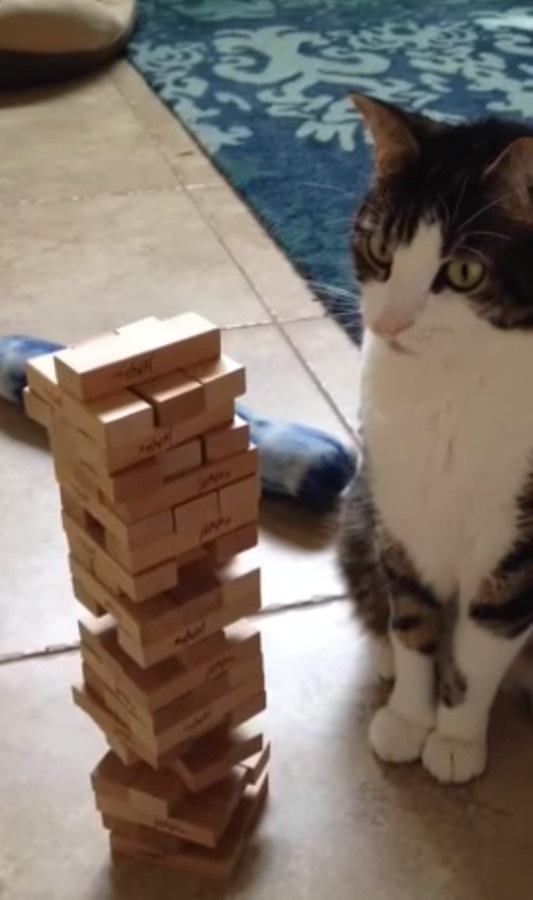 茫然とする猫
