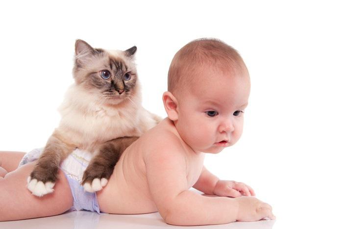おむつを穿く赤ちゃんと猫