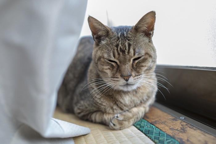 ひなたぼっこする老猫