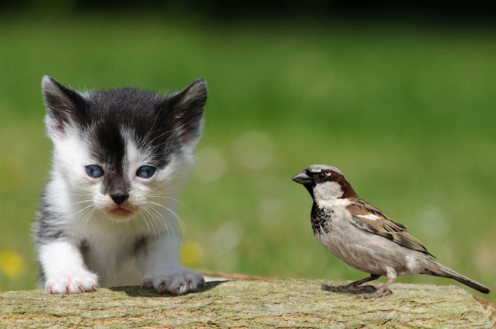 小鳥と子猫