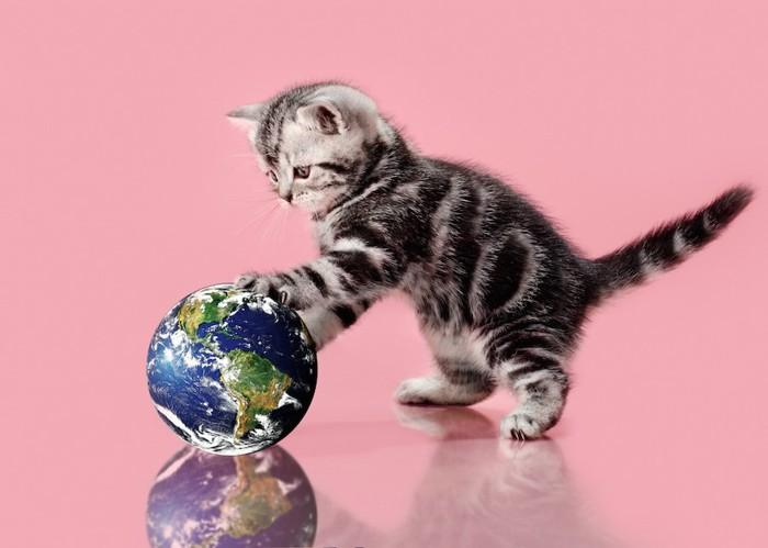 地球儀のボールで遊ぶ子猫