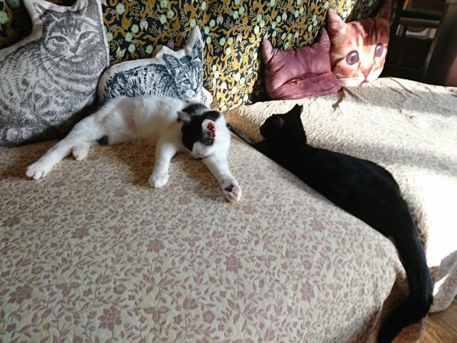 ソファでくつろぐ猫たち