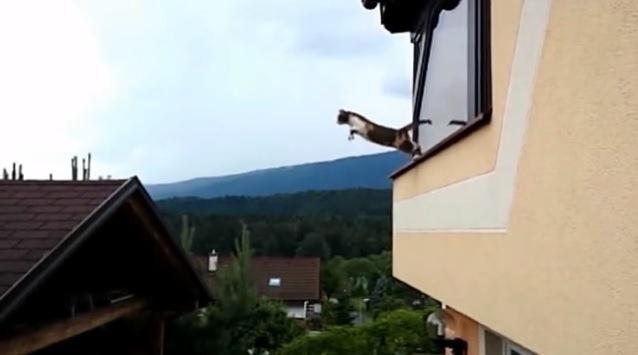 窓辺に脚をかけ、体を伸ばす猫