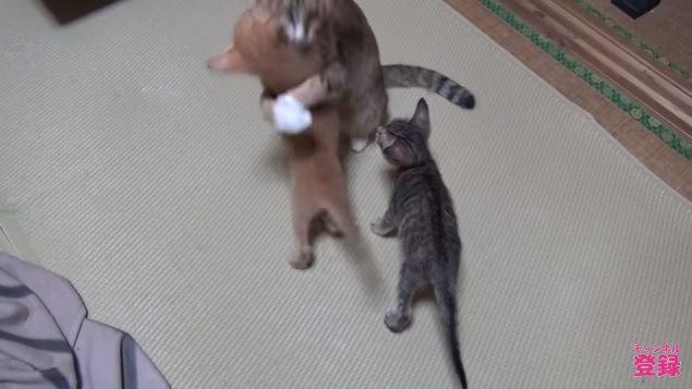 子猫を抱える母猫