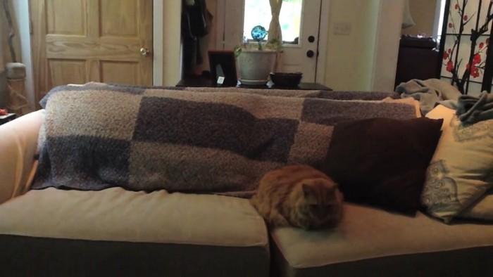猫ちゃんもスタンバイ