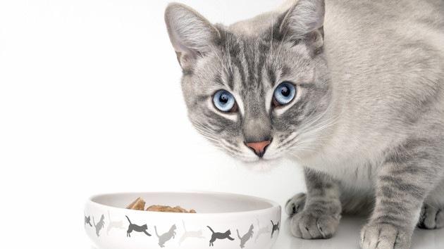 ご飯を食べている猫