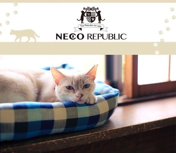 ネコリパブリックロゴと猫写真