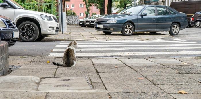 歩道に座っている猫