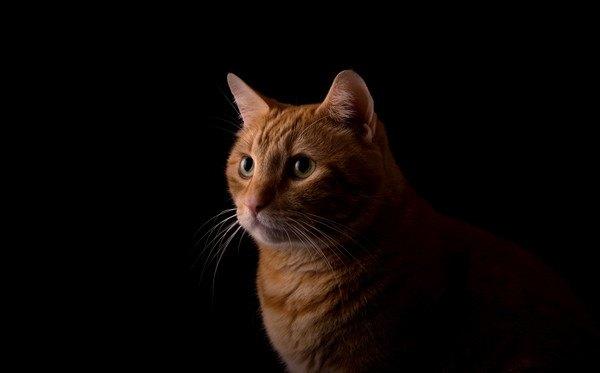 暗いところにいる茶色い猫のアップ