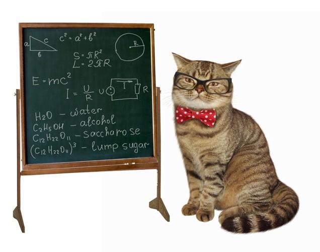 眼鏡をかけた猫と黒板