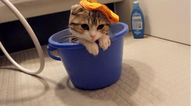 やや顔を上げる猫