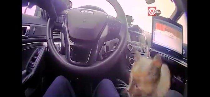パトカーでドライブを楽しむ猫