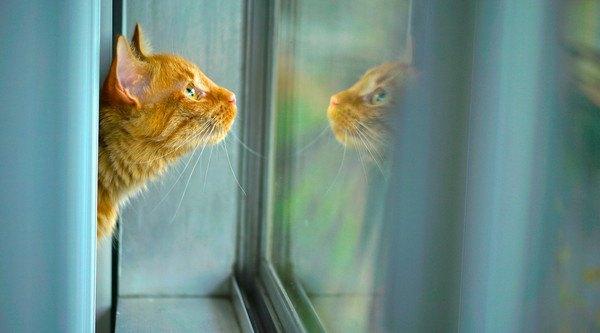 窓うつる自分を見る茶色い猫