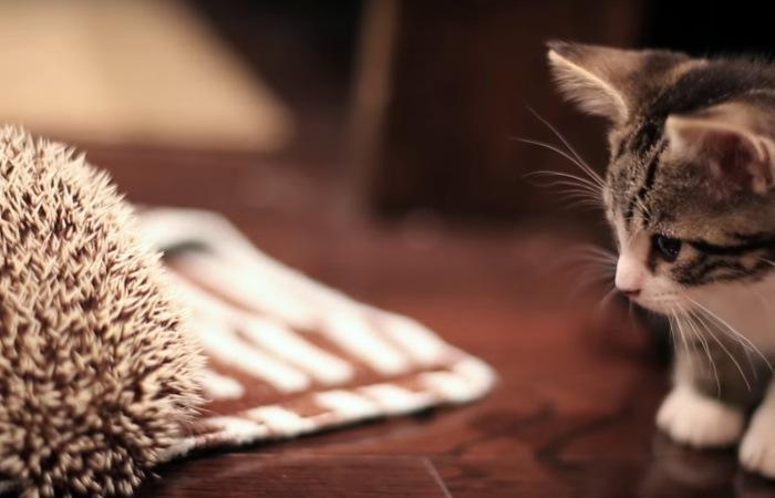 子猫と水浴びが終わったハリネズミ