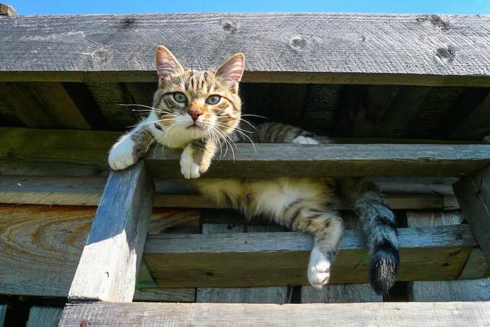 木のはしごの上でくつろぐ猫