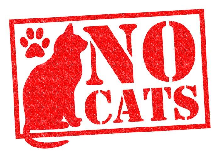 NO CATS