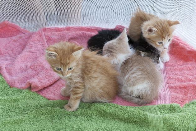タオルの上の子猫たち