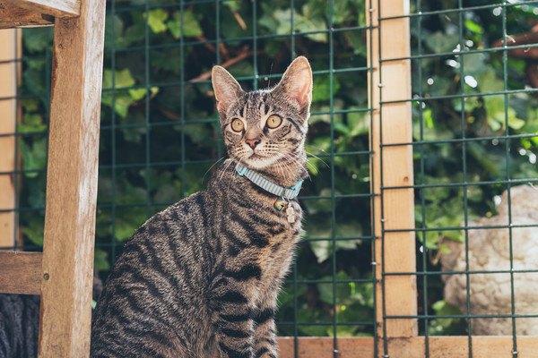 フェンス前にいる猫
