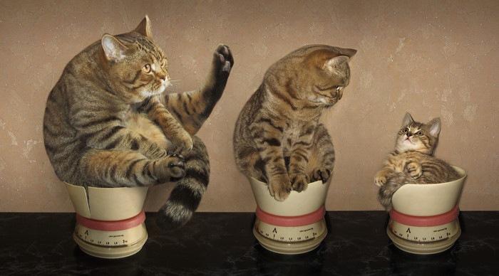 器に入った猫たち
