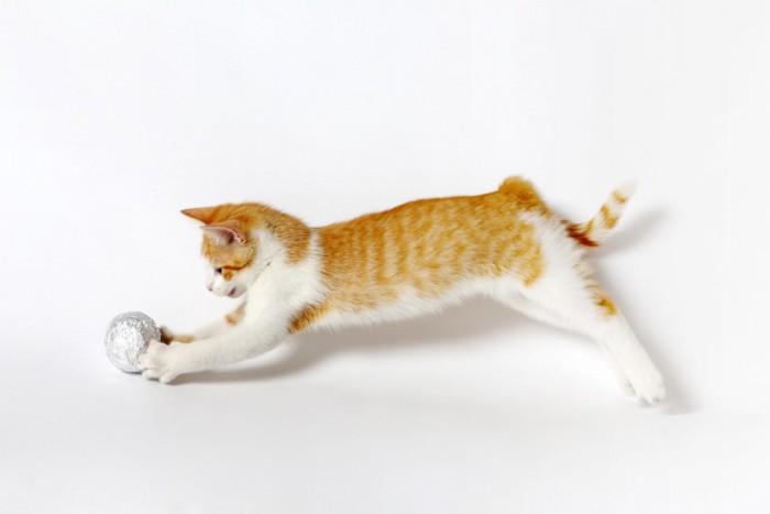 ボールを追いかけて走る猫