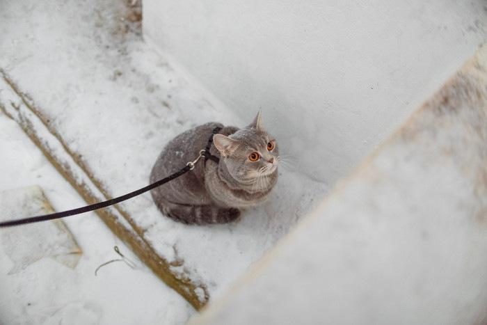 首輪を繋がれた目が赤い猫
