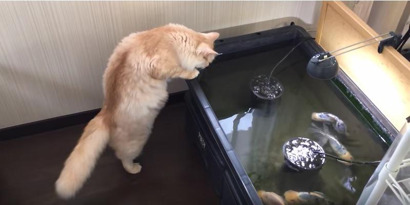 水槽を除く猫